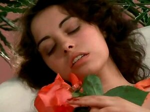 ม้วนหนังเต็มลูกรอยซ์ (1975)